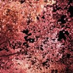 浅田次郎「天切り松闇がたり〈第1巻〉闇の花道」
